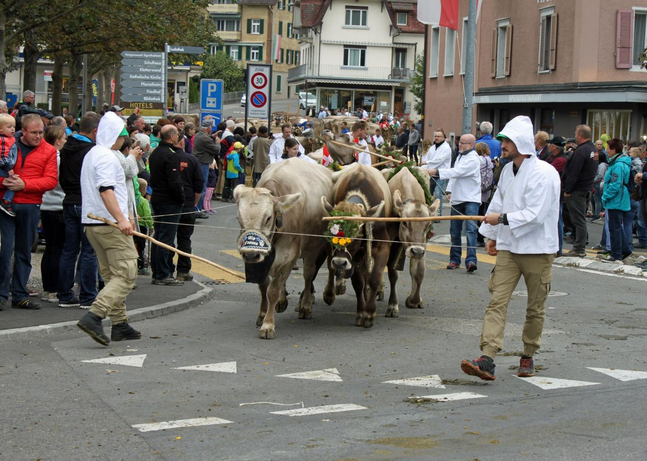 Autumn market and cattle show