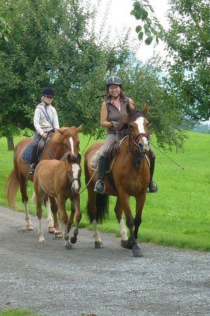 Reiten - Felder's Pferde
