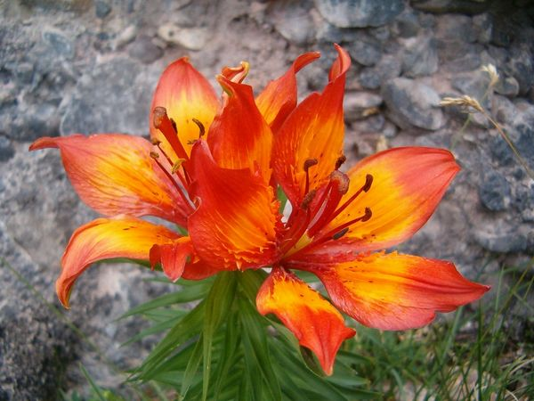 Rigi Blumenpfad