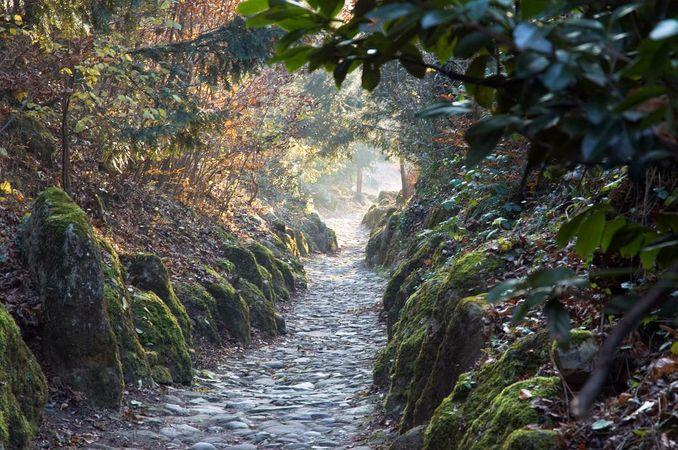Rigi Chestnut Trail: sector Immensee/Küssnacht - Weggis