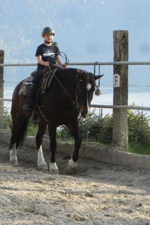 Pferdehof Buholz
