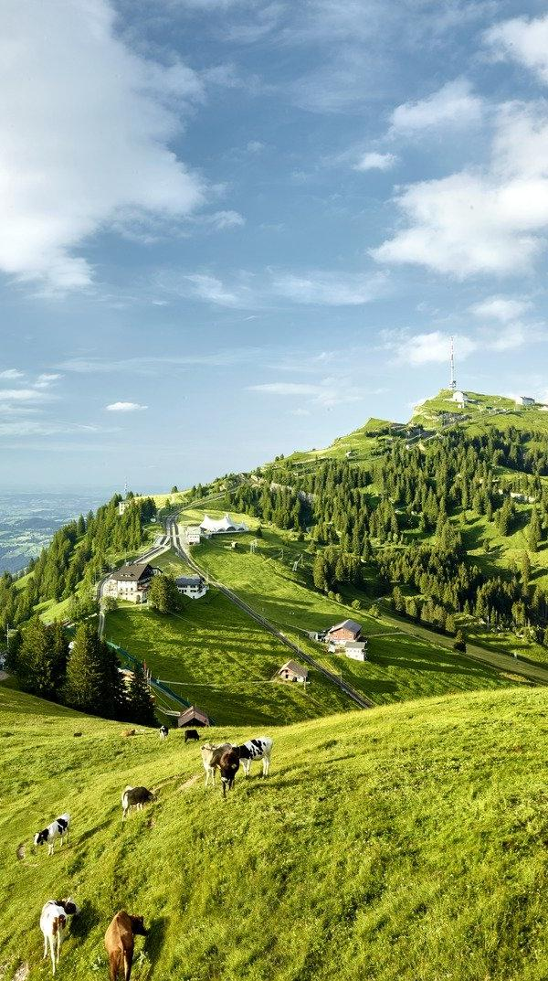 Summer on Mount Rigi