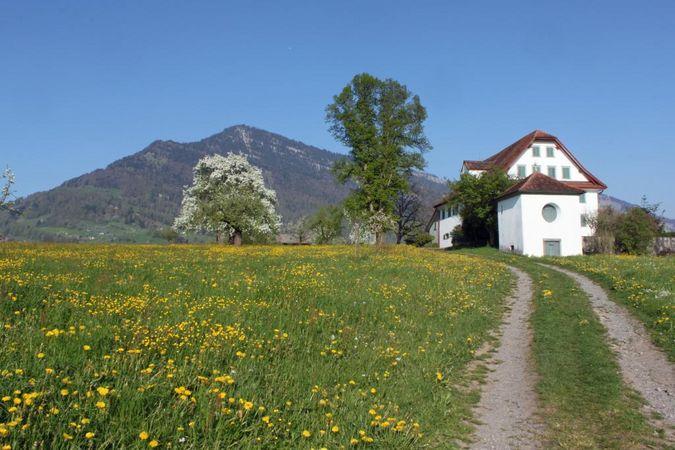 From Weggis-Unterdorf to the Herrenwald Woods