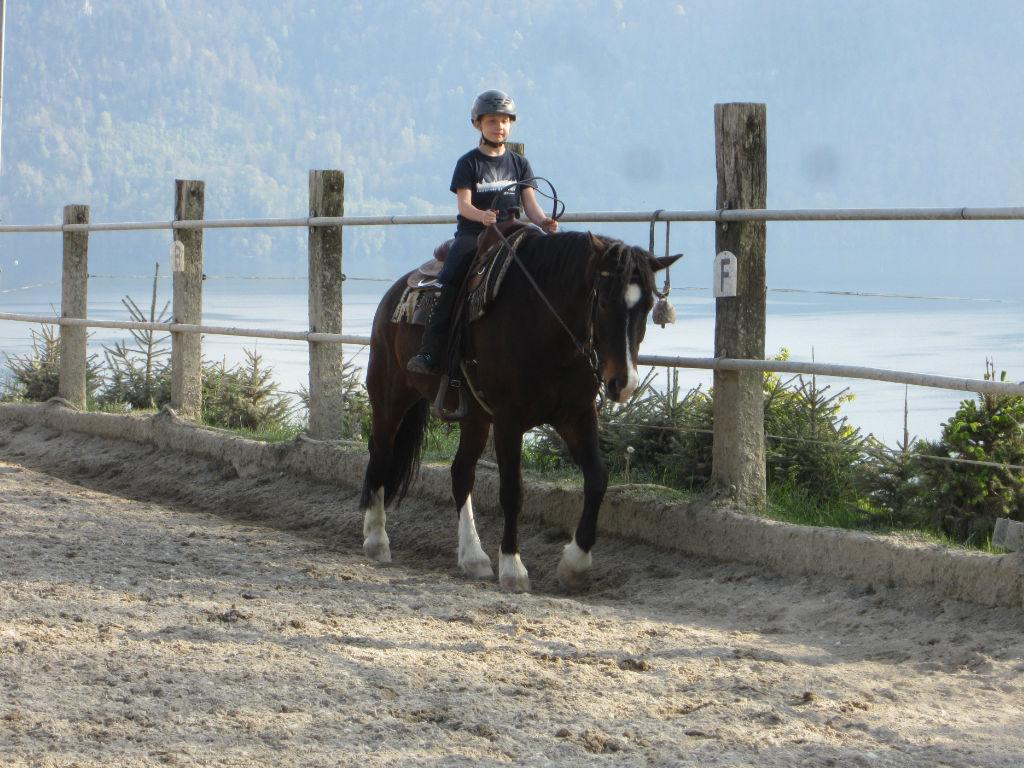 Horse farm Buholz